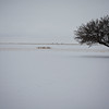 Tree in Snow Field
