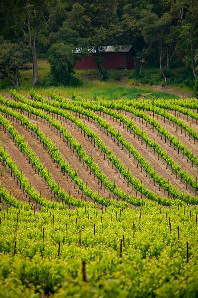 The Barn atop A Vineyard