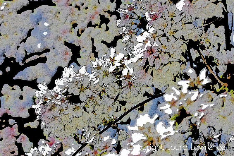 """A Touch of the Orient"" Red Surrealist Trees in Spring Digital Fine Art Photography by Loura Lawrence <br /> Weeping Cherry Tree, ""Snow Fountain"", in Spring<br /> Dayton, OH"