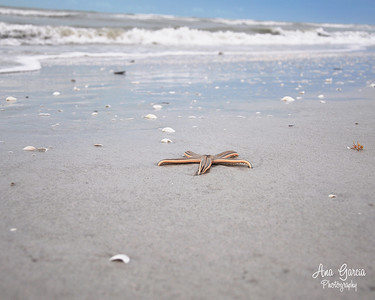 """Beached Starfish"""
