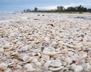 """Seashells In The Sand"""