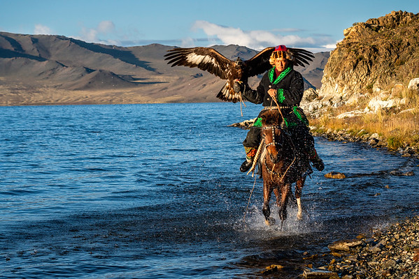 Mongolian Eagle Hunter riding in water.