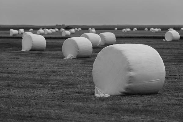 Marshmallow Fields