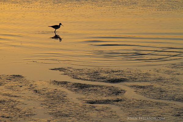 Sunrise at the Baylands Preserve, Palo Alto, California.