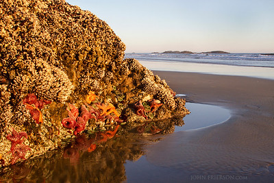 Low Tide at Pacific Rim National Park