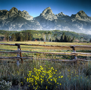 Grand Teton and Daisies