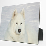 "Photo Panels Brilliant color reproduction on hardwood panels.  Sides and back are black with easel back.  Photo Panels are available in the following sizes: 5 x 7"" 8 x 10""  Highly resistant to ultraviolet rays, scuffs, scratches, water and fading."