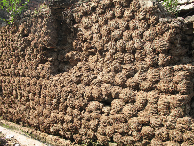 Cow dung drying on exterior wall to be used as cooking fuel. Serampore, West Bengal, India