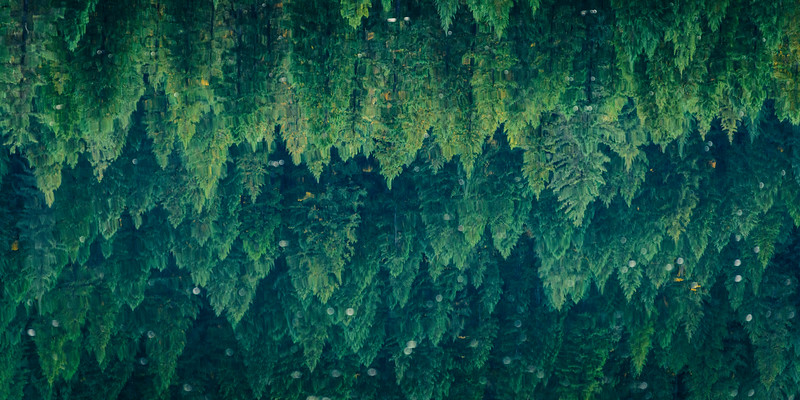 Transitions of the Pines