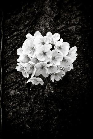 _SEP9312_edit_edit_iPhoto