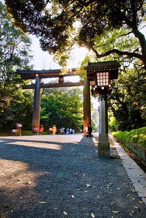 Torii at Meiji Shrine.
