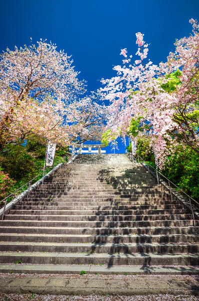 Cherry Blossoms in Fukuoka