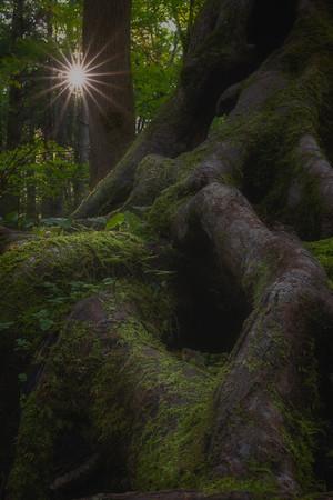 Ol Smoky Moss