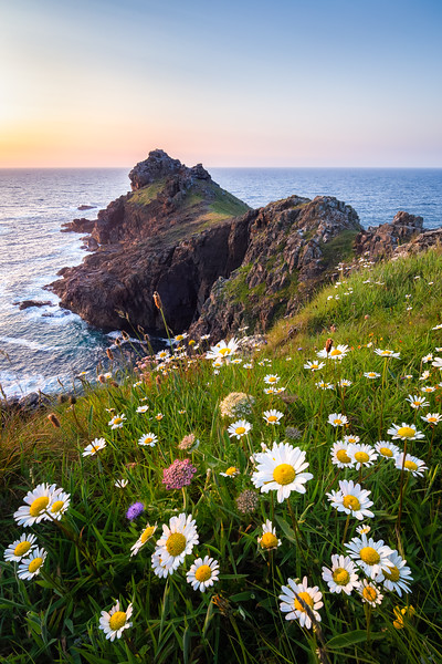 Wildflowers at Gurnards Head