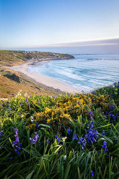Sennen Cove with Gorse & Bluebells