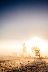 Frost Sunrise