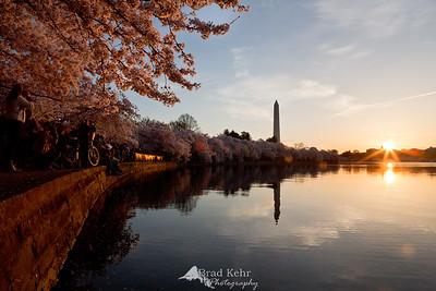 A Sunburst Over Cherry Blossoms