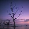 Tree of Sorrows