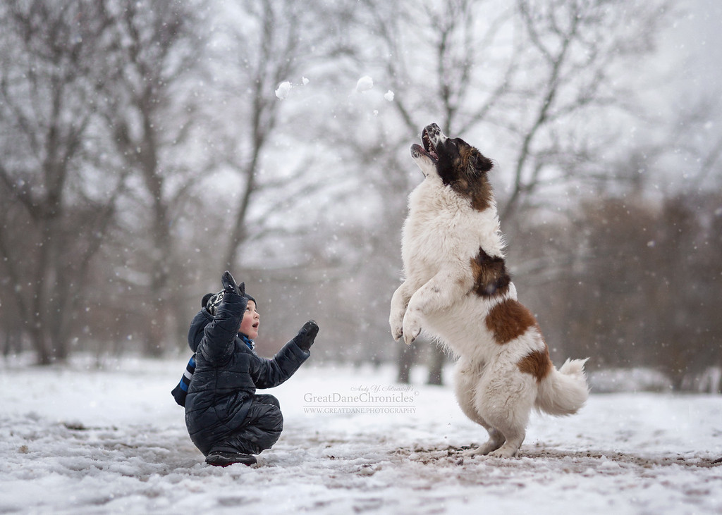 https://photos.smugmug.com/Prints/Little-Kids-and-their-Big-Dogs/i-BQ4vZ8N/0/XL/GDC_3655GDCh-XL.jpg