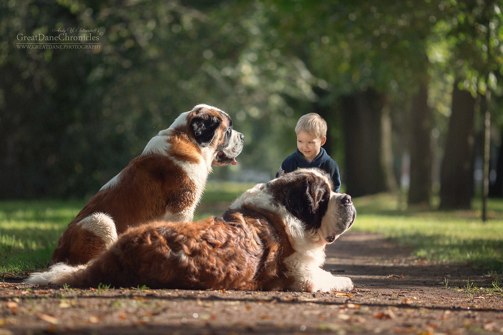 https://photos.smugmug.com/Prints/Little-Kids-and-their-Big-Dogs/i-fBs9JKL/0/XL/GDC_0063GDCh-XL.jpg