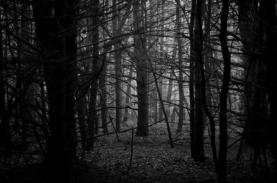 Darkened Woods