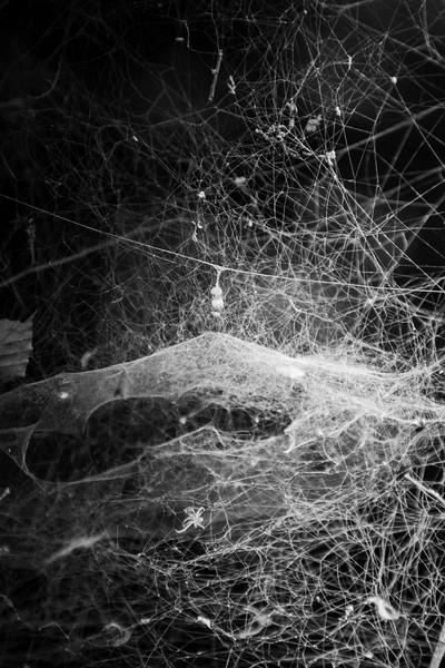 September 2017 - Webs