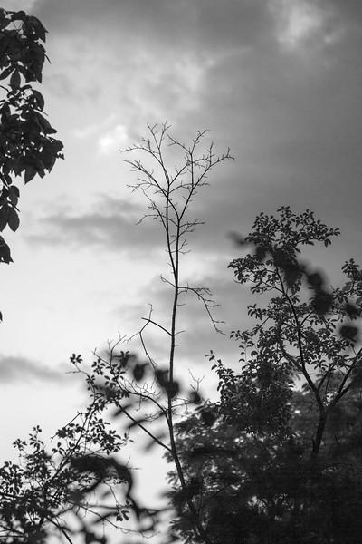 Empty Branch