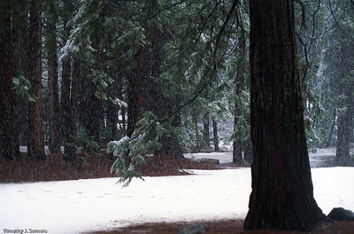 Snow in Yosemite Valley 2