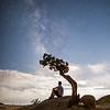 Juniper Tree Milky Way