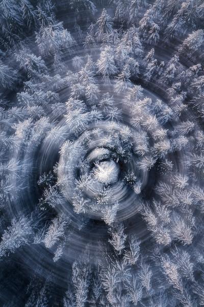 Willamette Forest Winter