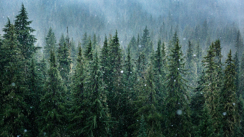 Willamette Forest First Snowfall