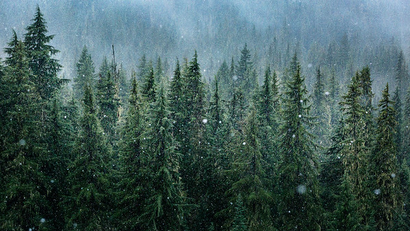 Willamette Forest First Snowfall