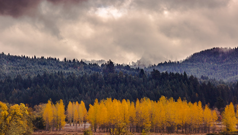 Fall in the Willamette Valley