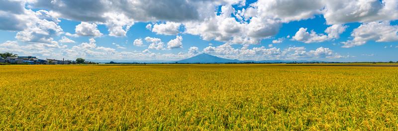Mt Iwaki And Rice Fields Panorama