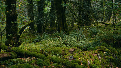 Ferns in the Forest - A Sacred Place of Rebirth