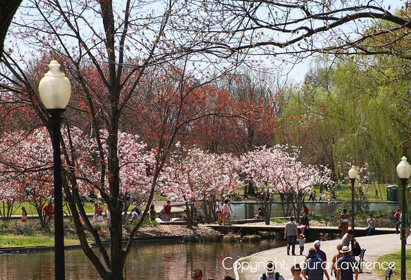 Washington D.C. National Cherry Blossom Festival
