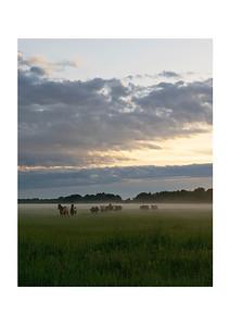 Herd at Sunset