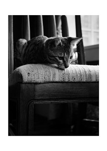 A Kitten's Curiosity