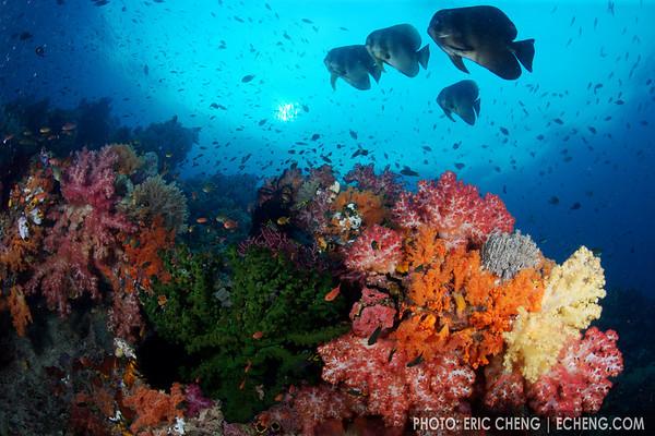 Reefscape, Fakfak, Indonesia