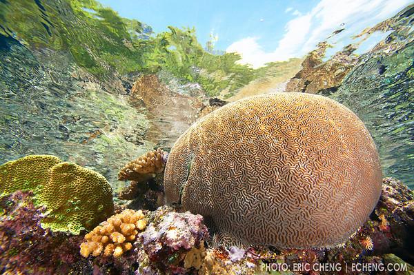 Shallow reefscape, Solomon Islands