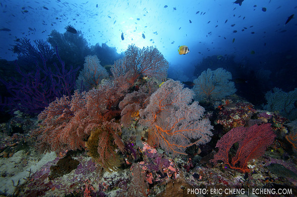 Reefscape, Solomon Islands