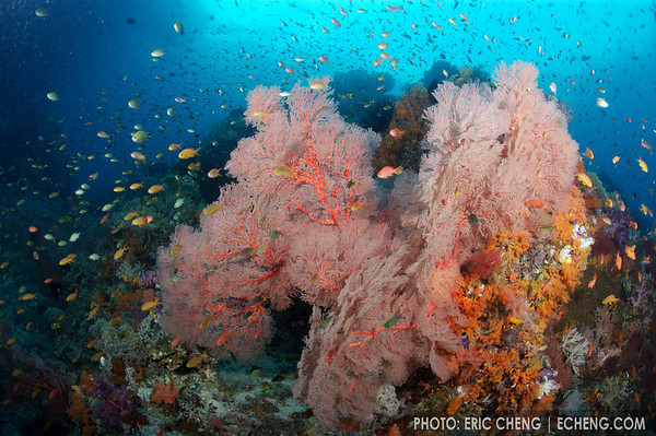 Reefscape, Fakfak, Indonesia