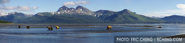 Panorama of Kodiak bears (Ursos arctos middendorffi) at Hallo Bay, Alaska. Stiches from multiple images using Adobe Photoshop.<br /> <br /> Canon 1D Mark II, Canon 70-200mm f2.8L IS lens @ 70mm<br /> <br /> 1/250s @ f/14, ISO 200