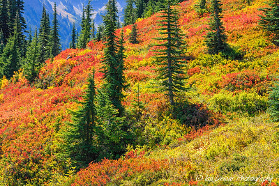Mount Rainier is a patchwork of fall colors as the season changes