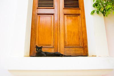 Cat. San Juan, Puerto Rico