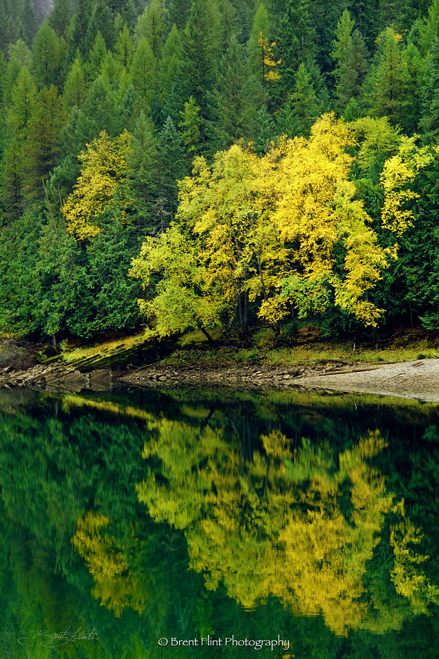 S.4095 - Autumn reflections on the Clark Fork River, Kaniksu Natl. Forest, ID.
