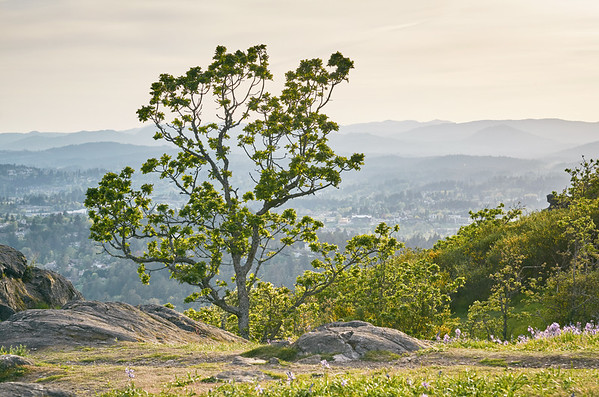 The Tree on the Mountain #1
