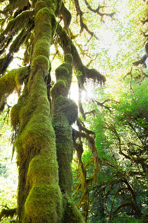 WINSTON O'NEIL PHOTOGRAPHY, HOH RAINFOREST  Photo by: Winston O'Neil