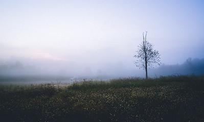 Carolina Fog