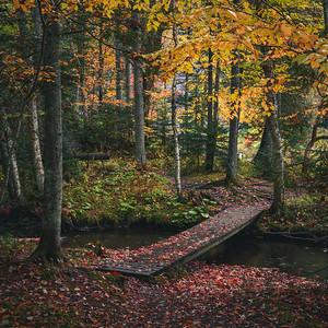 Path Through Autumn Great North Woods